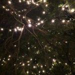 Bronnweiler Christbaum - Arbol de navidad más alto de alemania_querida_alemania